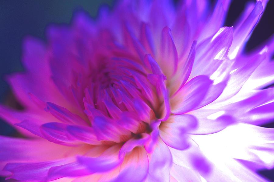 Dahlia Photographs Photograph - Mod Dahlia by Kathy Yates