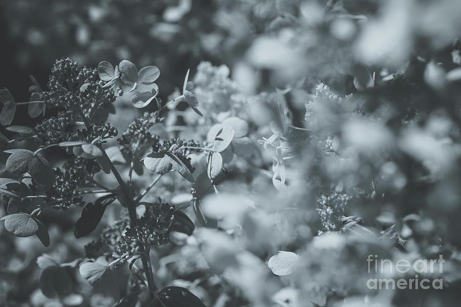 Modern Floral Series 1.3 Photograph
