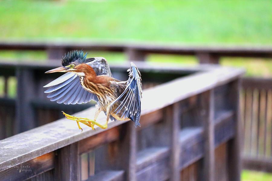 Mohawk Landing Photograph by Tony Umana