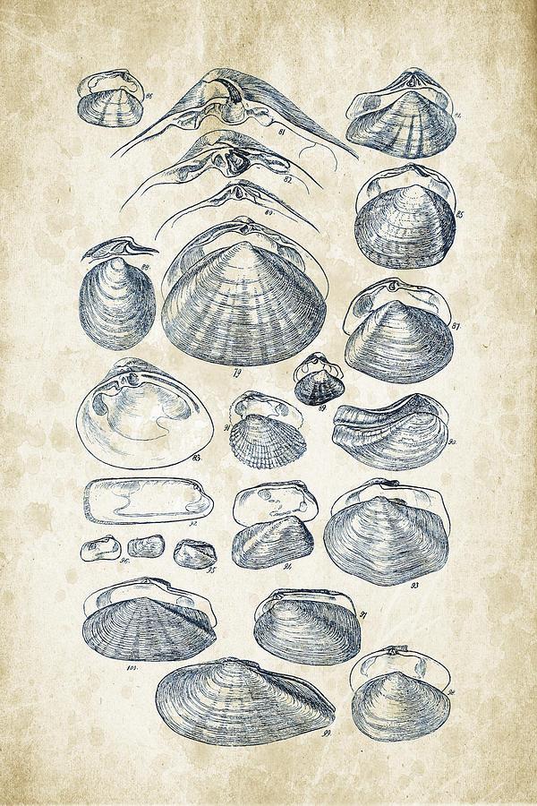 Molluscs Digital Art - Mollusks - 1842 - 04 by Aged Pixel