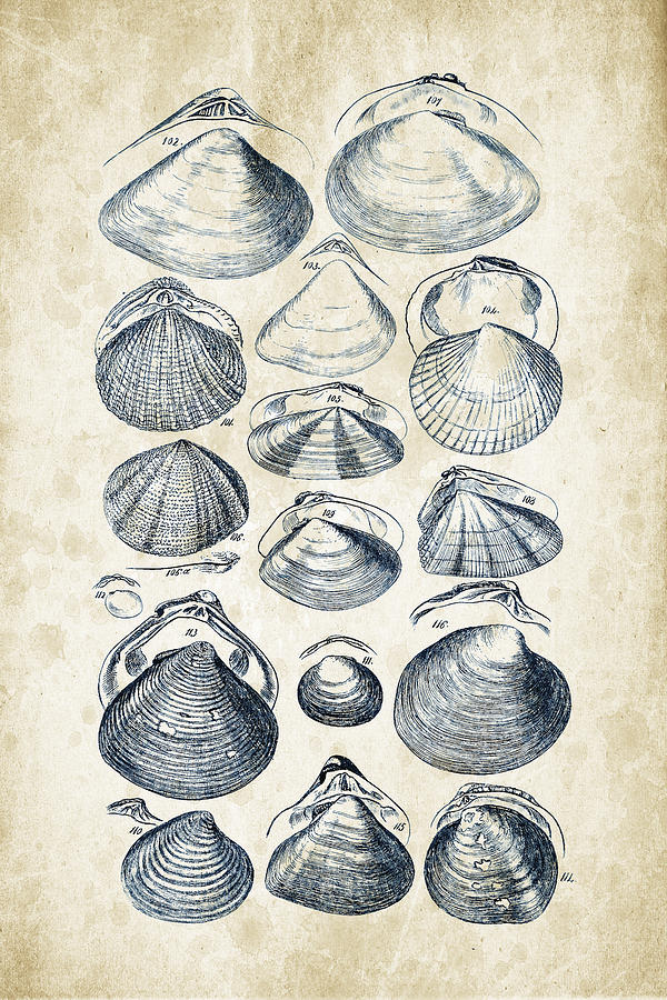 Molluscs Digital Art - Mollusks - 1842 - 05 by Aged Pixel