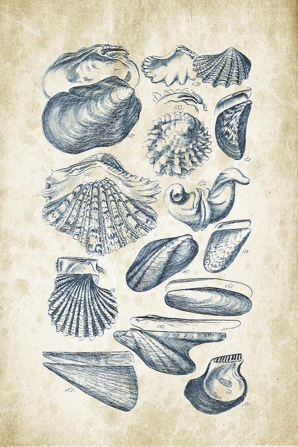 Molluscs Digital Art - Mollusks - 1842 - 09 by Aged Pixel