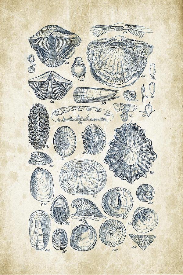 Molluscs Digital Art - Mollusks - 1842 - 12 by Aged Pixel