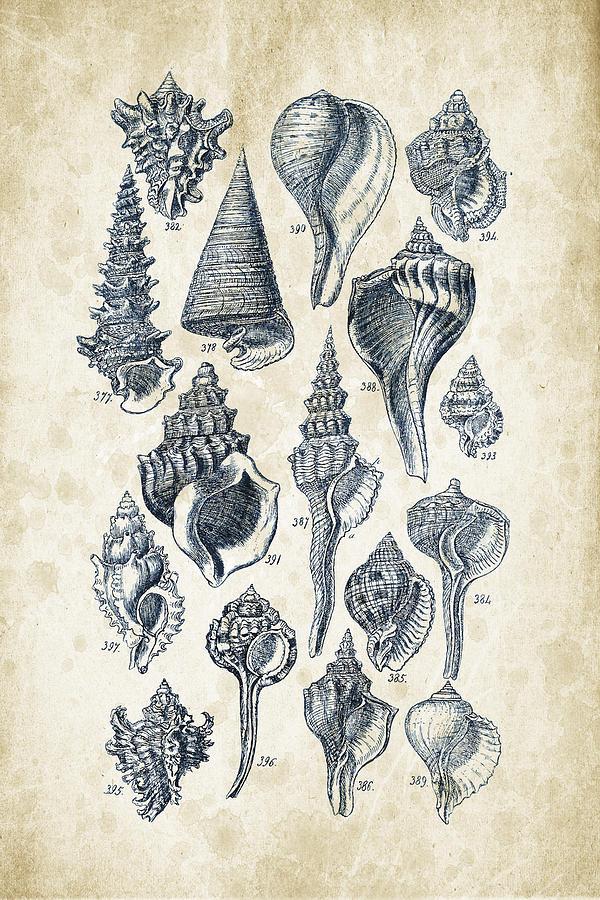 Molluscs Digital Art - Mollusks - 1842 - 17 by Aged Pixel