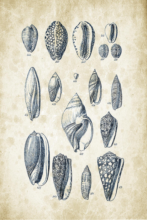 Molluscs Digital Art - Mollusks - 1842 - 21 by Aged Pixel