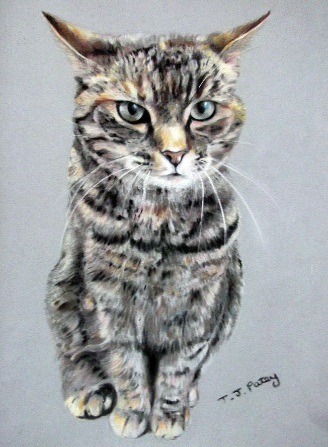 Cat Painting - Molly 2 by Tanya Patey