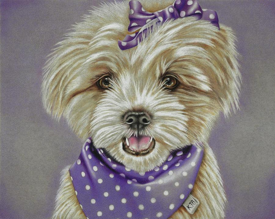 Dog Drawing - Molly The Maltese by Karrie J Butler