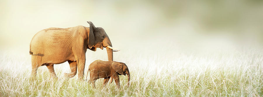 Mom And Baby Elephant Walking Through Tall Grass Photograph