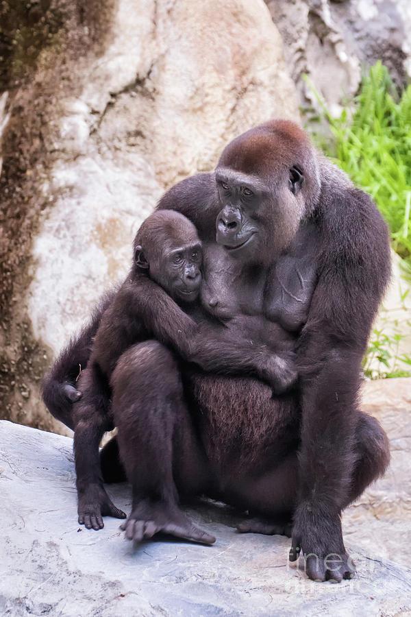 Mom and Baby Gorilla Sitting by Stephanie Hayes