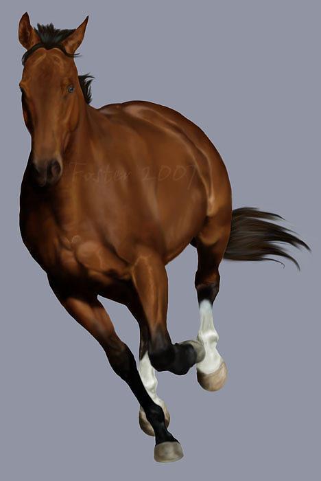 Horse Digital Art - Momentum by Jasmine Foster