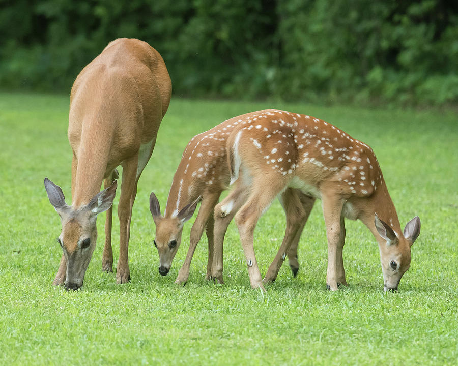 Image result for baby deer and mom together