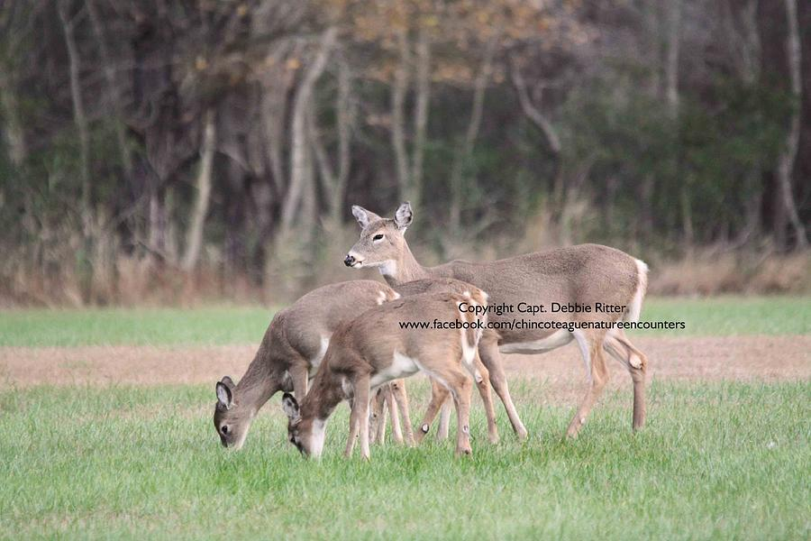 White Tailed Deer Photograph - Mommy Deerest by Captain Debbie Ritter