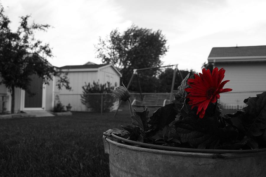 Backyard Photograph - Moms Backyard by Dylan Punke