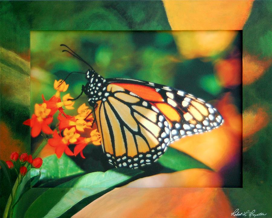 Butterfly Mixed Media - Monarc by Robert Boynton