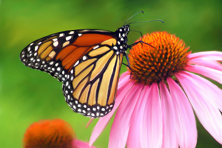 monarch butterfly painting by christina rollo