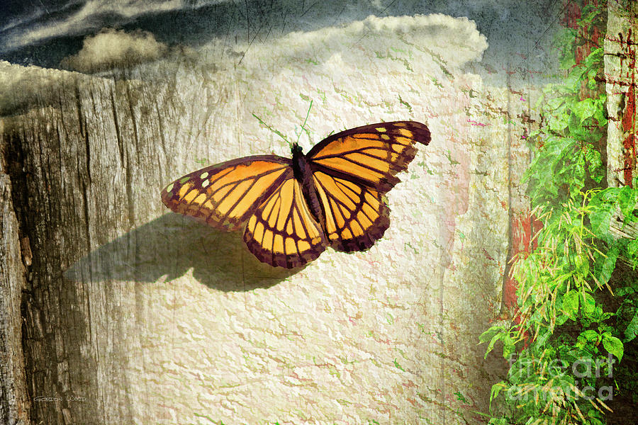 Monarch Butterfly Composite by Gordon Wood