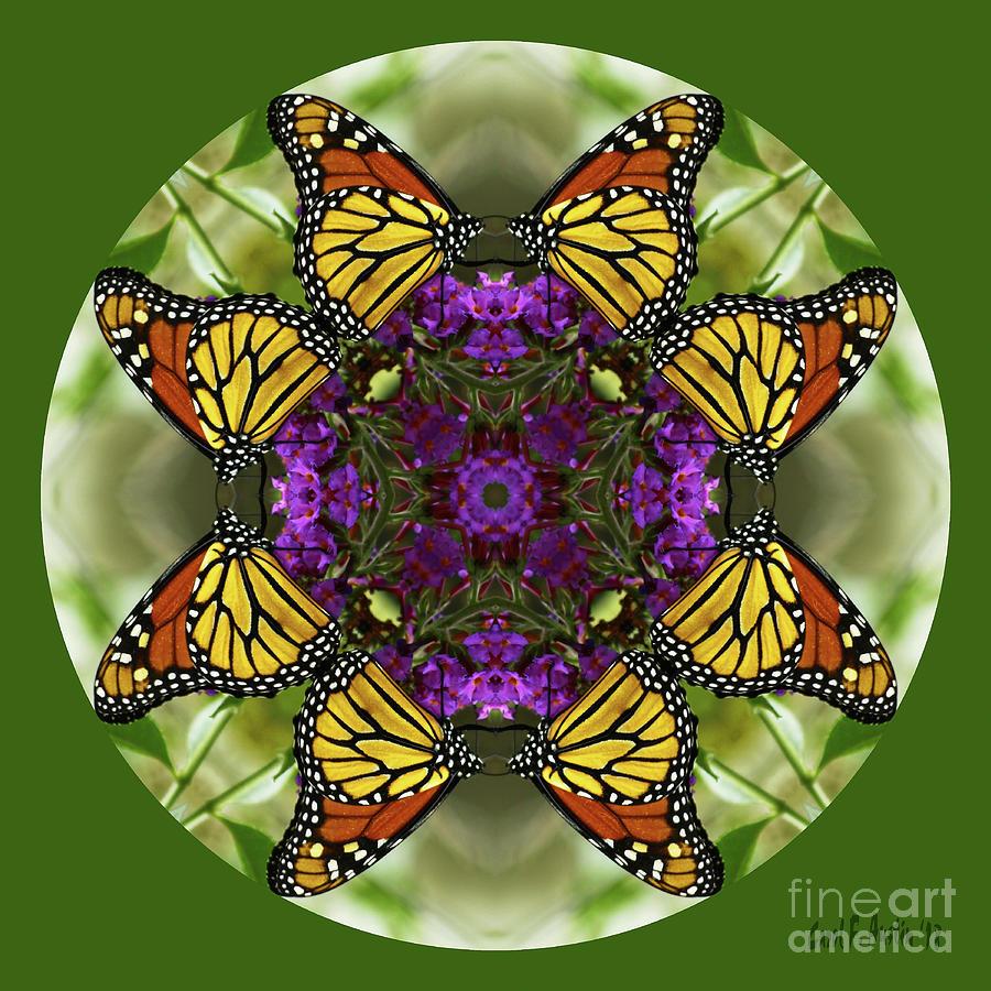 Monarch Photograph   Monarch Butterfly Garden Kaleidoscope Abstract Wall  Art By Carol F Austin