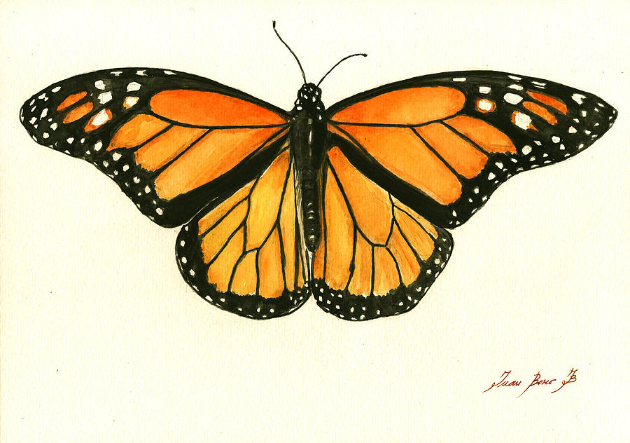 Famous Watercolour Butterfly Paintings
