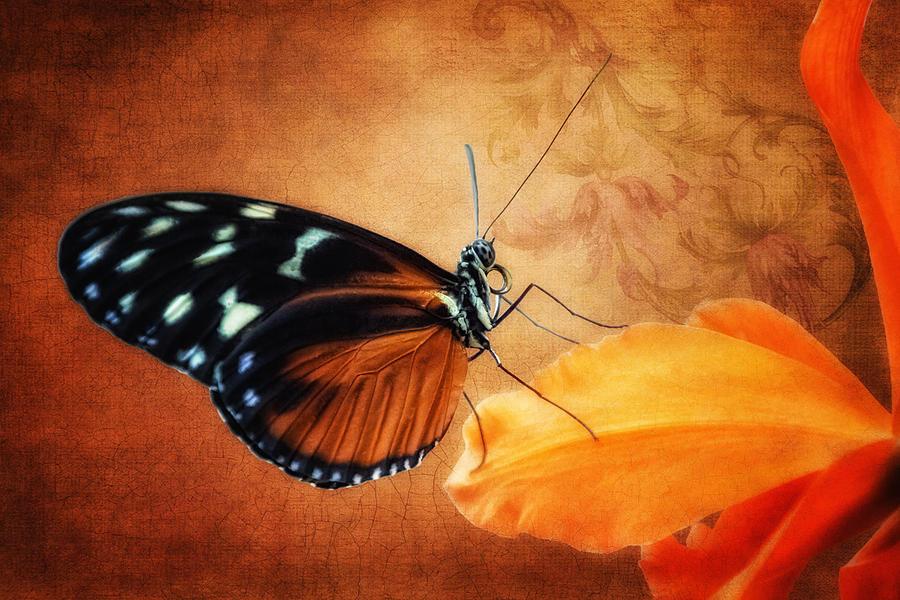 Butterfly Photograph - Monarch Butterfly on an Orchid Petal by Tom Mc Nemar