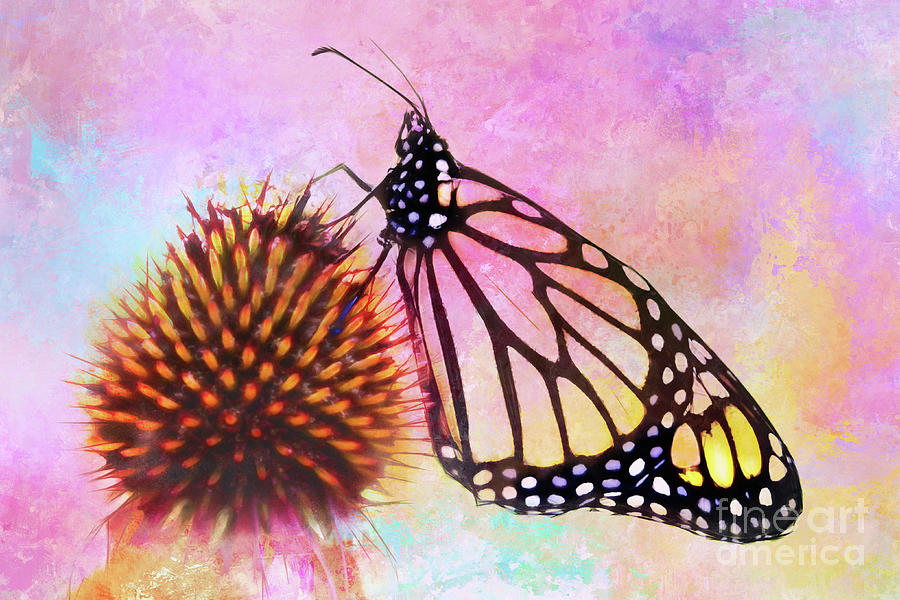 Monarch Butterfly on Coneflower Abstract by Anita Pollak