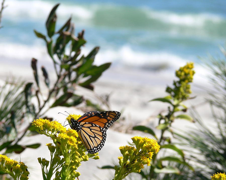 Waves Photograph - Monarch By The Sea by Tom LoPresti