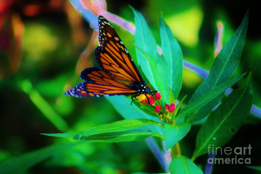 Butterfly Photograph - Monarch Heaven by Keri West