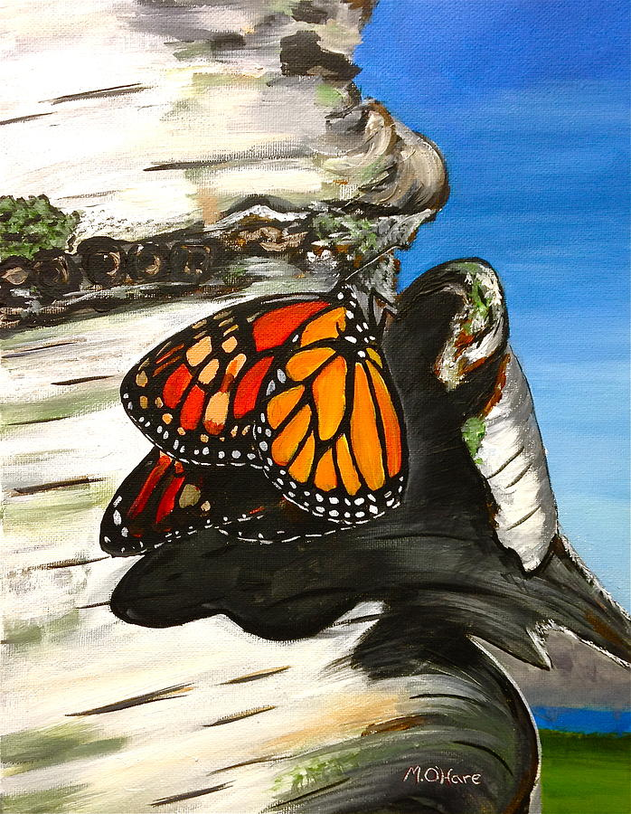Monarch on Birch by Meghan OHare