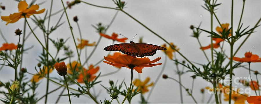 Monarch Butterflies Photograph - Monarch on the River by Leon Hollins III