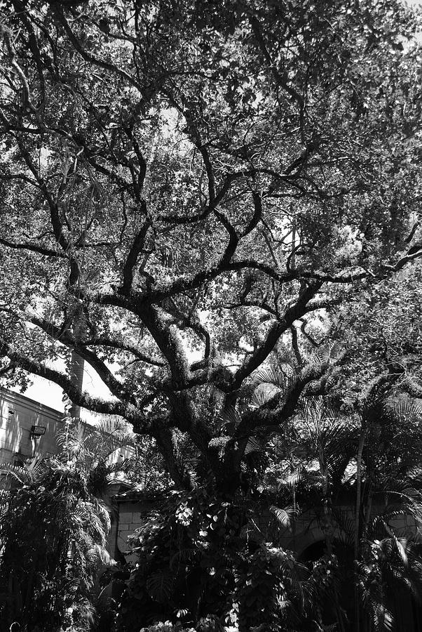 Black And White Photograph - Monastery Tree by Rob Hans
