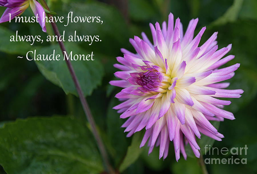 Monets I Must Have Flowers 3 Photograph By Quotes As Art