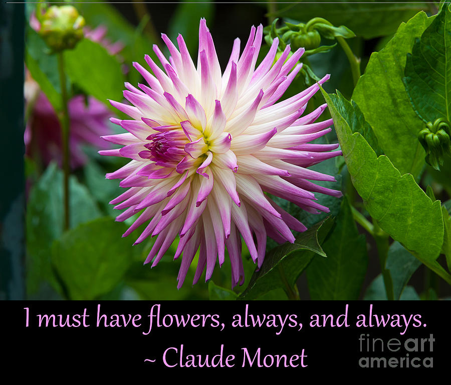 Monets I Must Have Flowers 9 Photograph By Quotes As Art