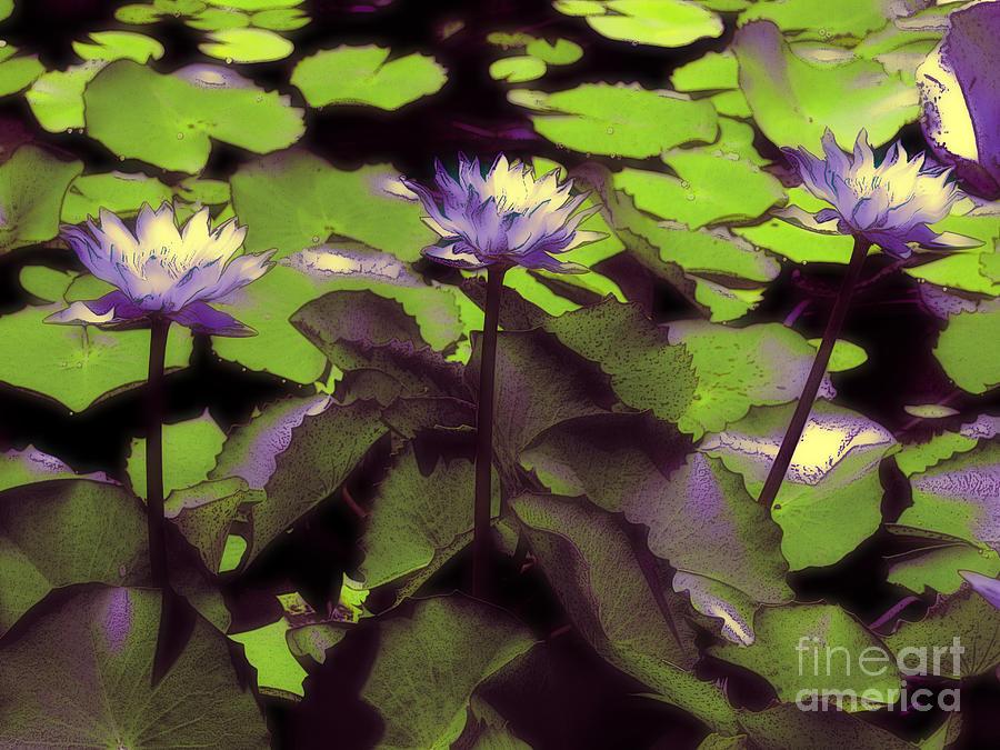 Karen Lewis Photograph - Monets Lillies by Karen Lewis