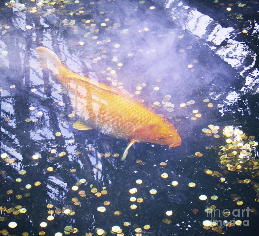 Fish Photograph - Money Koi by Robert Knight