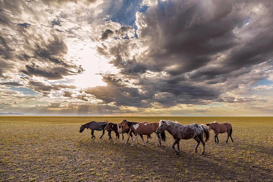 Mongolian Horses by Hitendra SINKAR