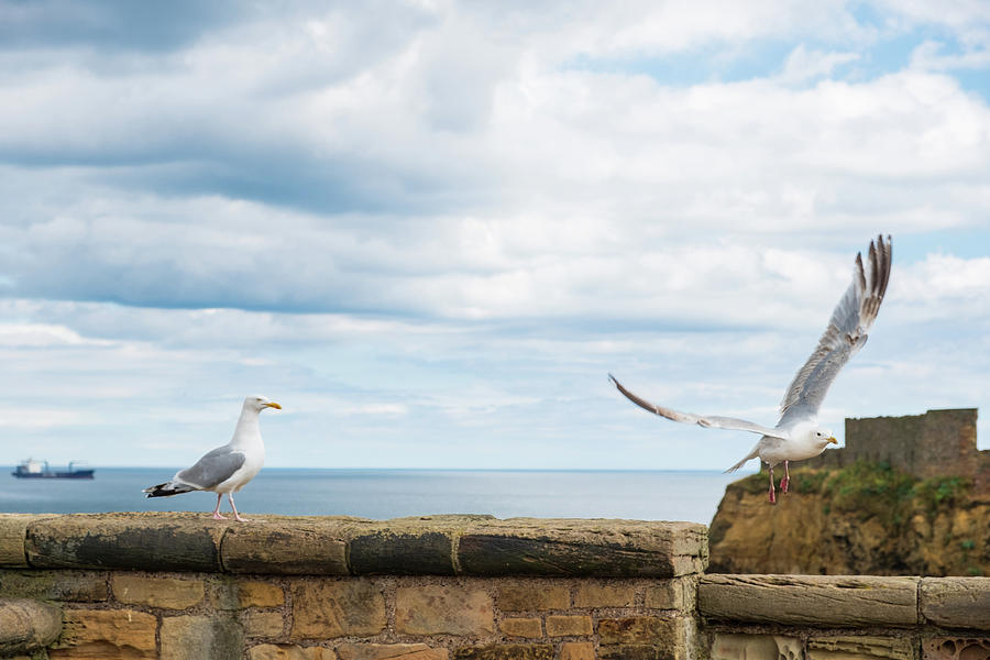 Bird Photograph - Monitored Seagull Take-off by Iordanis Pallikaras