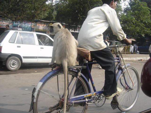 Monkey Bike Ride Photograph by Rakesh Sharma