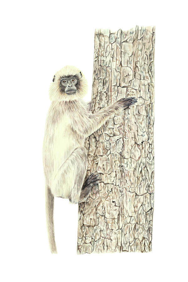 Monkey in the tree by Elizabeth Lock