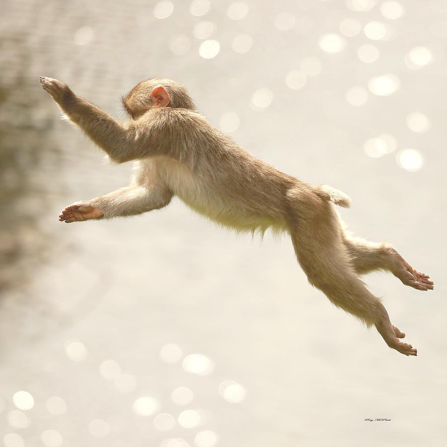 Monkey Jump Photograph - Monkey Jump by Roy  McPeak