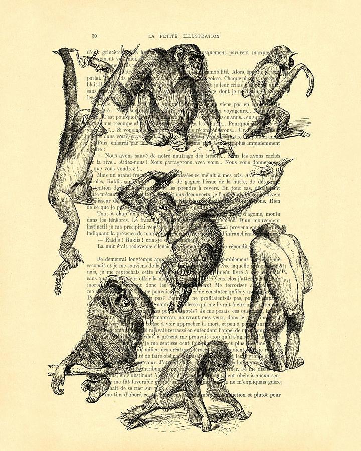 Monkeys Digital Art - Monkeys Black And White Illustration by Madame Memento