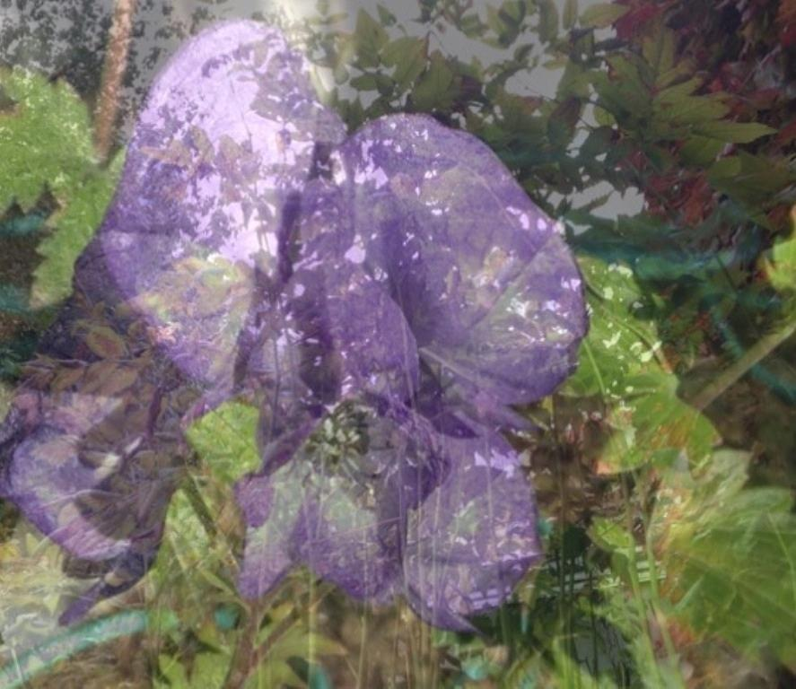 Flower Photograph - Monkshood by Rita Koivunen