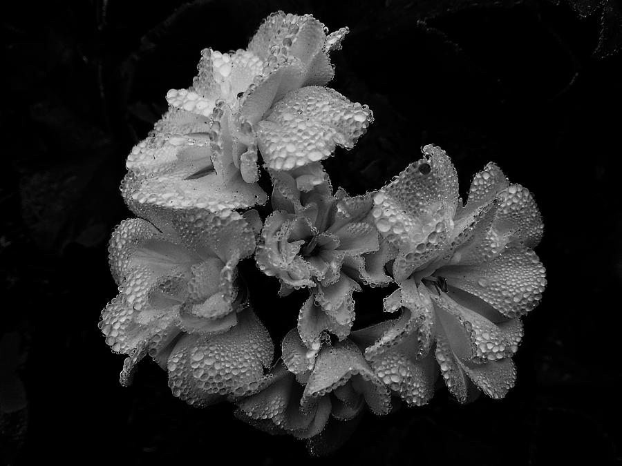 Flower Photograph - Mono Flower Chrome by Wayne Henry