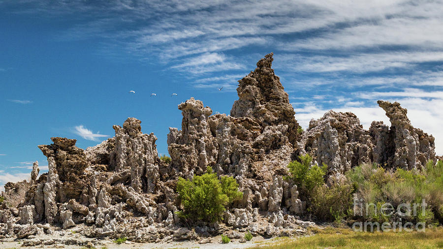 Mono Lake Tufa by Brandon Bonafede
