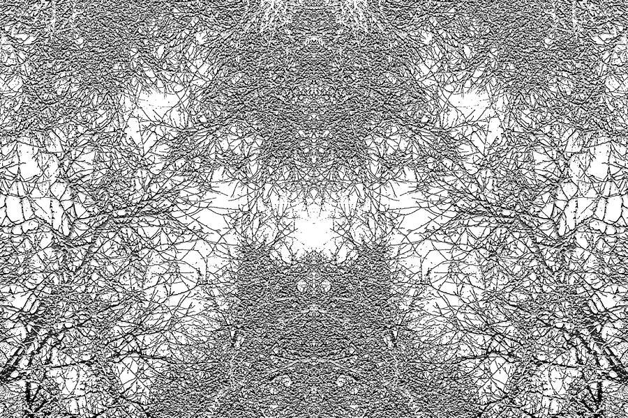 Winter Digital Art - Mono Trees by Steve Ball