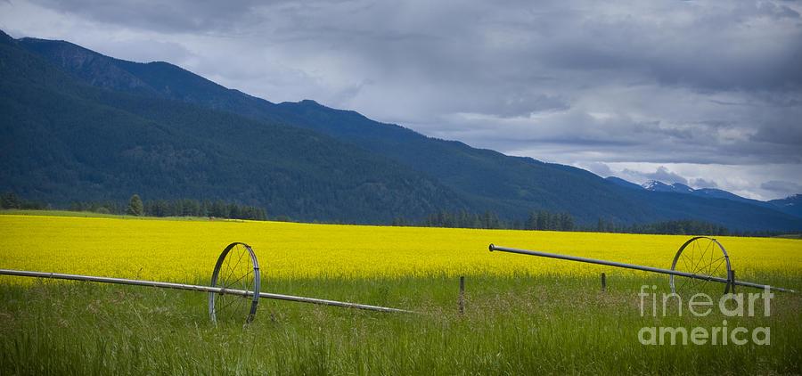 Gold Photograph - Montana Gold by Idaho Scenic Images Linda Lantzy