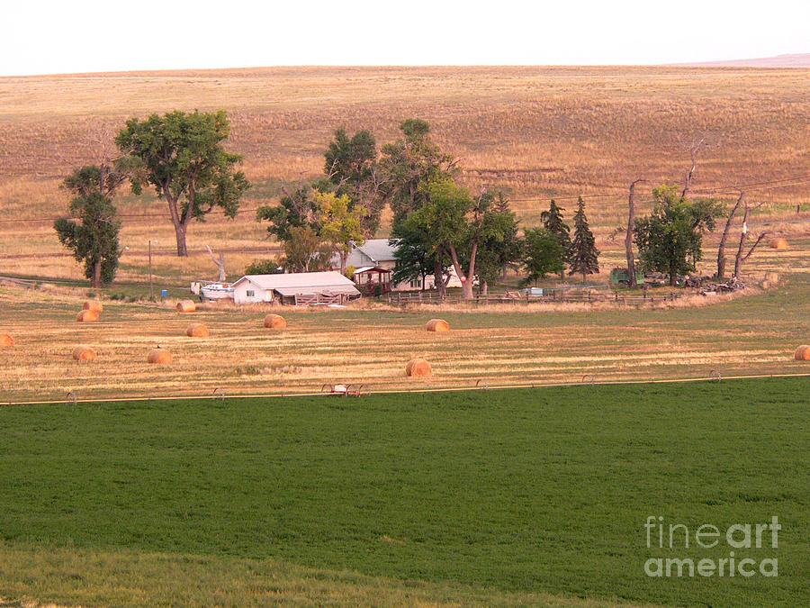 Great Falls Photograph - Montana Harvest Time by David Bearden
