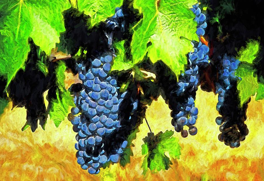 Montenegro Vineyard Digital Art