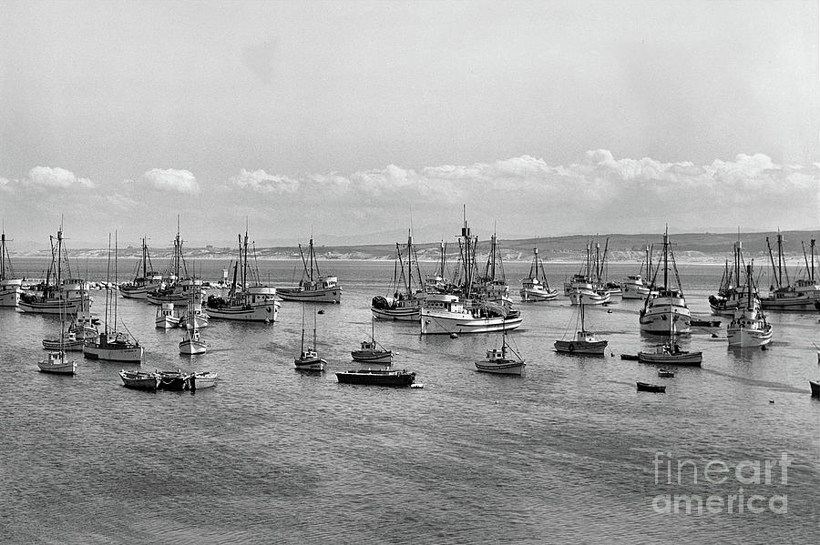 Monterey Fishing Fleet At Anchor In Monterey Harbor,  1946 Photograph