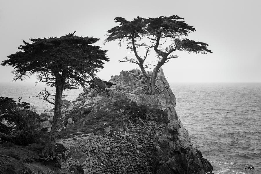 Monterey Peninsula II BW by David Gordon