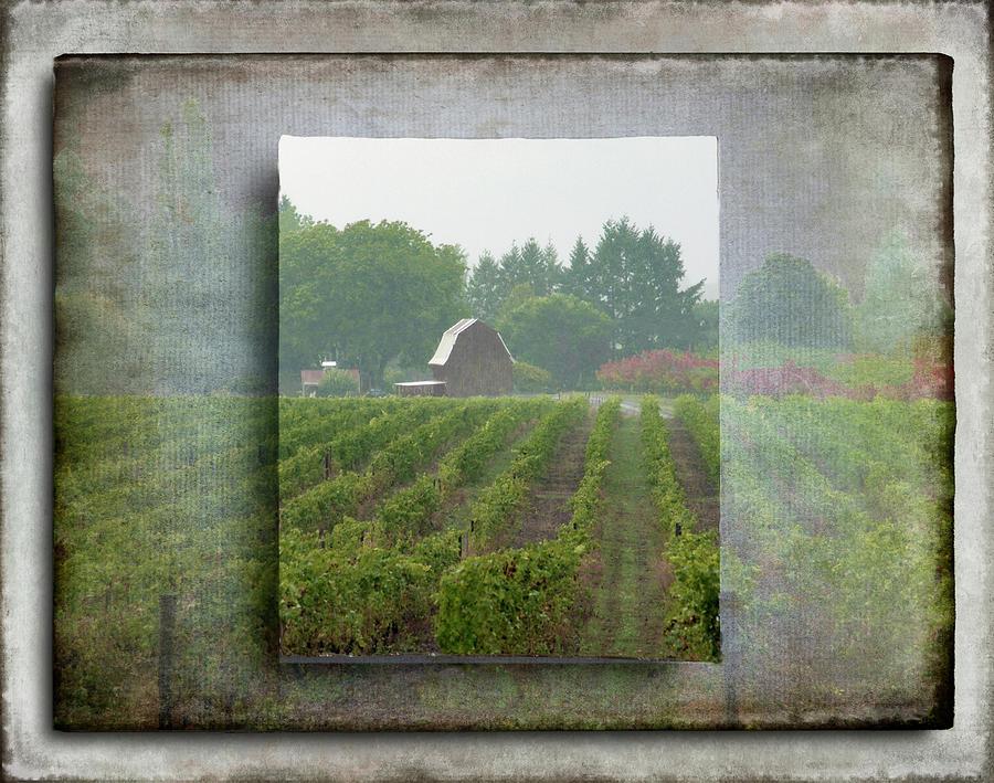 Montinore Winery by Jeffrey Jensen
