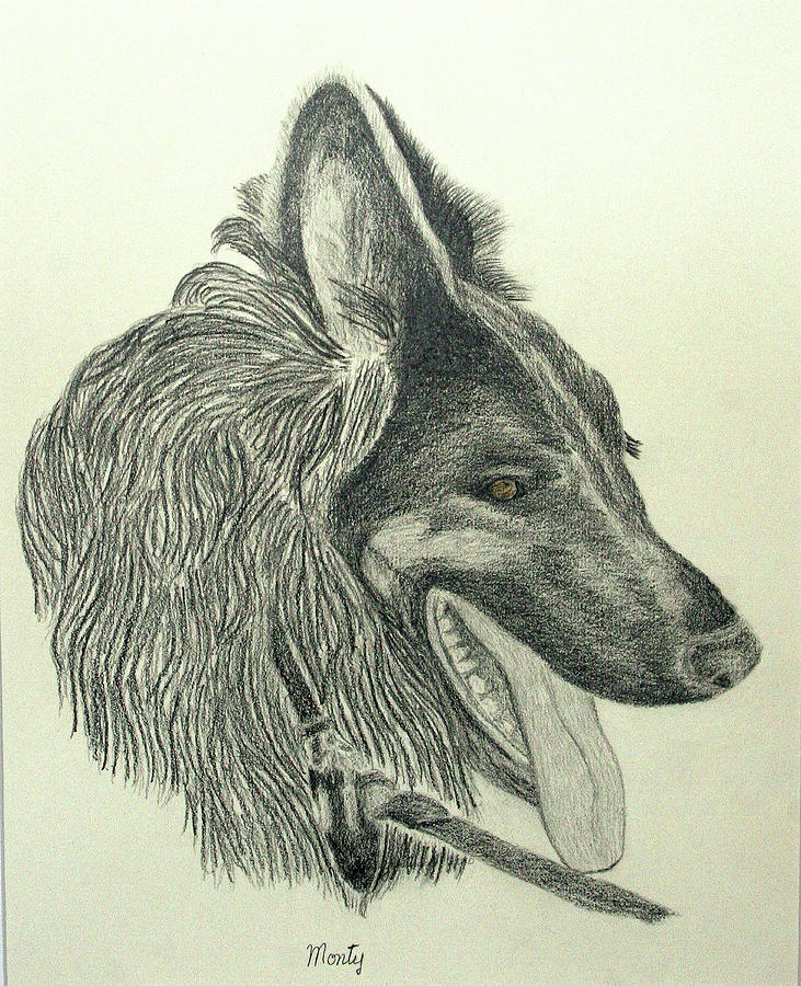 Graphite Drawing - Monty by Jim Justinick